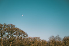 Daytime Moon in April (Adam_Marshall) Tags: adam marshall blue landscape nature stereocolours outdoors moon trees spring sky sawtry adammarshall canon eos70d sigma 1750mmf28 vast empty open wilderness countryside cambridgeshire