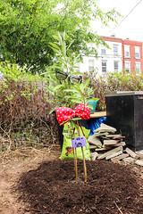 Philly Tree Trek Planting (Philadelphia Parks and Recreation) Tags: family kids spring contest giveaway press adults treeplanting philadelphiaeagles northphilly connorbarwin fairmountparkconservancy treephilly phillytreetrek kathrynottlovell budthetree