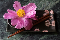 peony (Samantha Forsberg) Tags: flowers flower floral flora peony botany floralart sushiplate