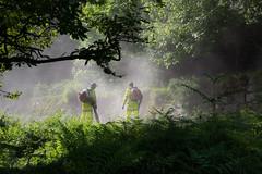 Road workers in the dust_NK2_1903 (Jean Fry - catching up at last!) Tags: uk trees menatwork devon nationalparks dartmoor westcountry burrator roadworkers englanduk dartmoornationalpark roadsurfacing