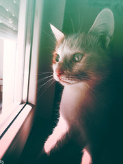 Cats Edition 7 - (19) (Robert Krstevski) Tags: pet cats pets cute eye window animal animals cat eyes kitten kitty kittens kitties cuteness petlovers animallovers catsphotography robertkrstevski robertkrstevskiblogspotcom catsedition7