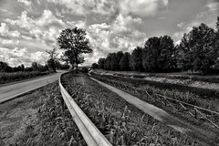 Curved line... (henryark) Tags: outdoor landscape blackandwhite blackwhite monochrome monoart field street pontedera tuscany italy enrico nannini henryark nikon nikond750 perspective curve asphalt tree trees river natur signs hurdles protections clouds sky cloudy