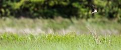 5DSA1004_Lr6_44s1s (Richard W2008) Tags: cathkinmarshwildlifereserve scottishwildlifetrust scotland nature flora fauna