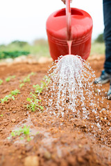 Man watering seedling on soil with red watering can (Impact Investing Australia) Tags: green spring nature water plant garden soil gardening young growth tree environmental farm agriculture country drops season leaf fresh new summer ecology life small seed eco growing freshness organic land vegetable wet stem botany rain can sprout sprinkler dirt falling