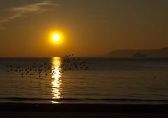 Ku Srs (brahimBas) Tags: sunset sea cloud sun bird beach ship