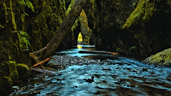 Illusive Arch (Kevin Benedict Photography) Tags: green oregon creek river landscape waterfall nikon rainforest stream arch perspective canyon hike illusion verdant lush columbiarivergorge slotcanyon logjam oneontagorge photobenedict