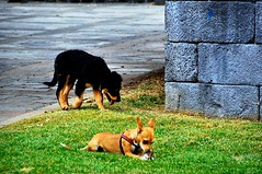 Winner and loser (Lorybusin) Tags: juego gioco game winner animals cani perros dogs