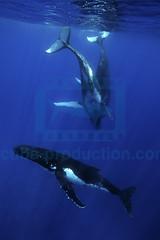 2012 09 MIGNON TONGA 4652