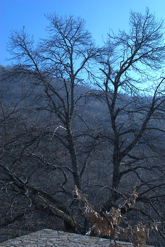 canopy in the winter