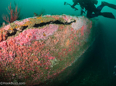 Redondo Barge Colors (HookBuzz.com) Tags: losangeles scuba diving southbay redondo shipwrecks barge corynactisanemone