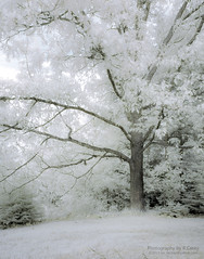gently solid (rsc_escher) Tags: trees tree nature d50 ir nikon infrared summertime hoya r72 copyrightrscescheryahoocom