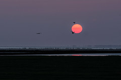 The Beautiful North of the Netherlands (Gies!) Tags: sunset sea netherlands waddenzee zonsondergang north waddensea kwelder