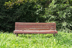 (Mimadeo) Tags: park wood summer tree green nature grass leaves garden bench season outdoors wooden spring chair solitude loneliness seat nobody foliage silence rest relaxation tranquil