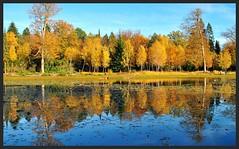 Autumn Reflections (Rob McC) Tags: autumn water reflections landscape birch cowpond greatwindsorpark vpu1 vpu2 vpu3