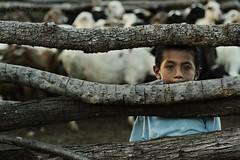 Cuando el pastoreo ha terminado (Andres Gonzlez/Fotografa) Tags: gente retrato aprobado reportaje wayu way