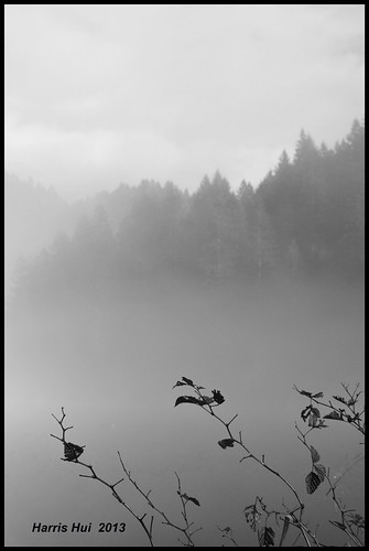 It Is Easier To Catch The Fog - Minnekhada Park N13778e