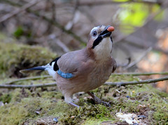 Jay (Car Crazy Rob) Tags: uk nikon explore rc stockgrove rushmere 2013 d7000 vision:mountain=0604 vision:outdoor=0962