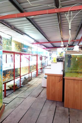 鹿港貝殻廊