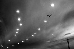 IMGP5238-stavrosstam (stavrosstam) Tags: bw bird reflections lights ofportalsandparallelworlds magicparkthessaloniki