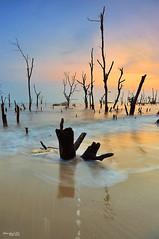 s.t.u.m.p|selangor (Zawawi Isa) Tags: wood sunset seascape beach vertical stump pantai borabora selangor waterscape crystalclearwater malaysiaseascape