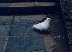 _2270055-1 (25 minutes) Tags: life china street nature animal zoo pigeon olympus snap f18 guizhou 45mm omd guiyang streetsnap em5 mzuiko omdem5