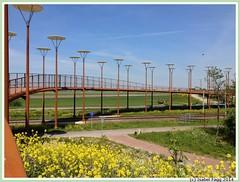 N3MP-WP bridge in Zoetermeer (Isabel Fagg) Tags: bridge zoetermeer pont brug westerpark n3mp techconsult