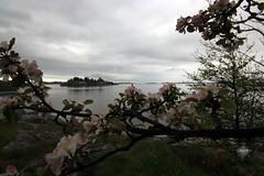 Beautiful Grimstad (Spiderdama) Tags: sea sky flower apple water norway landscape norge sørlandet groos skywatch grimstad