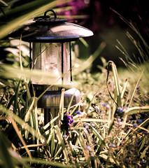 Old Light (Scruddy) Tags: old light green lamp grass metal garden dof bokeh rusty gritty messy flare lantern aluminium scruffy
