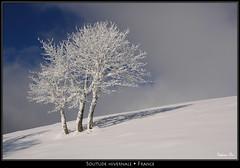 Solitude hivernale (HimalAnda) Tags: snow france tree alsace neige lorraine arbre vosges givre eos400d canoneos400d stéphanebon
