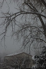 February 16, 2015 - Snow covers the trees in Thornton. (LE Worley)