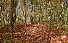 FALL HIKE (Gary Colwell) Tags: forest fallcolors newbrunswick wirral fallcolours