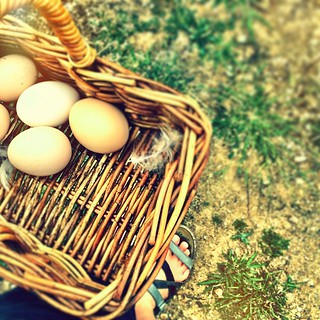039/365 • being shown my farming duties for the next week - five eggs to start me off... I can see frittatas in my future! • #039_2015 #littlefarm #eggs #housesitting #nofixedaddress #basket #friends #chickens #bumnuts