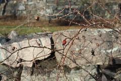 Ruissalo, Canon EOS 1200D
