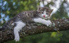 kittens (03) (Vlado Fereni) Tags: trees cats animals spring kitty croatia kittens catsdogs animalplanet hrvatska hrvatskozagorje zagorje nikkor357028 nikond600