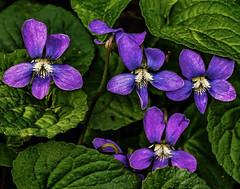 IMG_7062tzl1scTBbLGE (ultravivid imaging) Tags: flowers canon colorful vivid imaging ultra ultravivid canon40d ultravividimaging