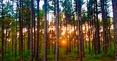 SunSet (Mado AwaD) Tags: sunset sky plant color tree green skyline forest landscape ma outdoor may mado pinetum 2016