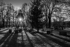 Shadow play (PixPep) Tags: trees light graveyard shadows shadowplay charlottenberg pixpep