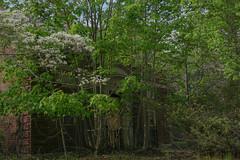 Kings Park in the Spring (irvingwhitney) Tags: new york island suffolk long abandon asylum nissequogue psychiatric kingsparkpsychiatriccenter kppc a6000 alpha6000