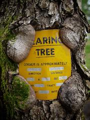 Bearing Tree (daveumich) Tags: cabin michigan upperpeninsula