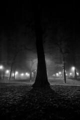 Padova, Piazza Castello (p!o) Tags: padova piazzacastello backlight blackandwhite tree trees albero controluce silhouette d700 lamppost