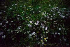 (Marion Schreiber) Tags: flowers night fleurs darkness nacht availablelight blumen 20mm tamron lowkey vignetting mato d800 flors nordbahnhof finster wildblumen availabledarkness ultrawideangle 2040mm gstettn