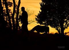 Fotograf i konj o zalasku (MountMan Photo) Tags: fotograf croatia zalazak siluete novivinodolski konji primorskogoranska