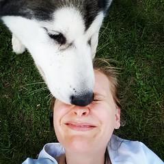IMG_20151005_172034 (ameliabeare) Tags: dog puppy malamute smooches alaskanmalamute