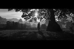 manAndTree1 (r_if) Tags: light shadow sun tree sunshine silhouette lumix gm1 lumix20mm17