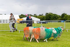 cricket_2015-60.jpg (Fingal County Council) Tags: fingal newbridgehouse flavours donabate pwp flavoursoffingal fingalcoco fingalcountycouncil