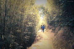 -Across the bamboo forest after an arduous journey. (AllenPan02) Tags: life autumn green nature forest relax hongkong scenery hiking sony bamboo explore story teenager