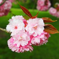 IMG_4567 (Irina Souiki) Tags: parcdesceaux france paris sceaux flowers nature parc park