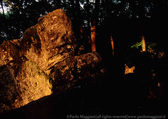 220602-30-Caprione-Liguria-Laspezia-21-Giugno-Farfalla-di-Luce-dorata-Solstizio-d-estate-light-golden-butterfly-summer-solstice-june.jpg (Paolo_Maggiani) Tags: 2002 calzolari caprione laspezia montemarcello farfalla farfalladiluce megalite