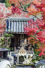 Shrine at Eikan-dou in Autumn (PV9007 Photography) Tags: autumn red rot fall leaves japan maple kyoto herbst momiji    kansai  herbstlaub japanischer eikando 2015  ahorn laubfrbung eikandou herbstlaubfrbung