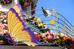 Swing into Spring (Rick & Bart) Tags: music france canon butterfly disney bandstand townsquare disneylandresortparis disneylandpark marnelavallee swingintospring rickbart thebestofday gnneniyisi rickvink eos70d